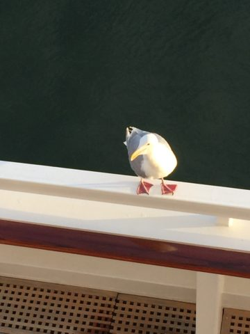 Johnathan Seagull - a very loud bird who made himself comfortable on the railing right below our cabin